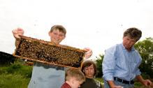 Bees, our bridge to Kona